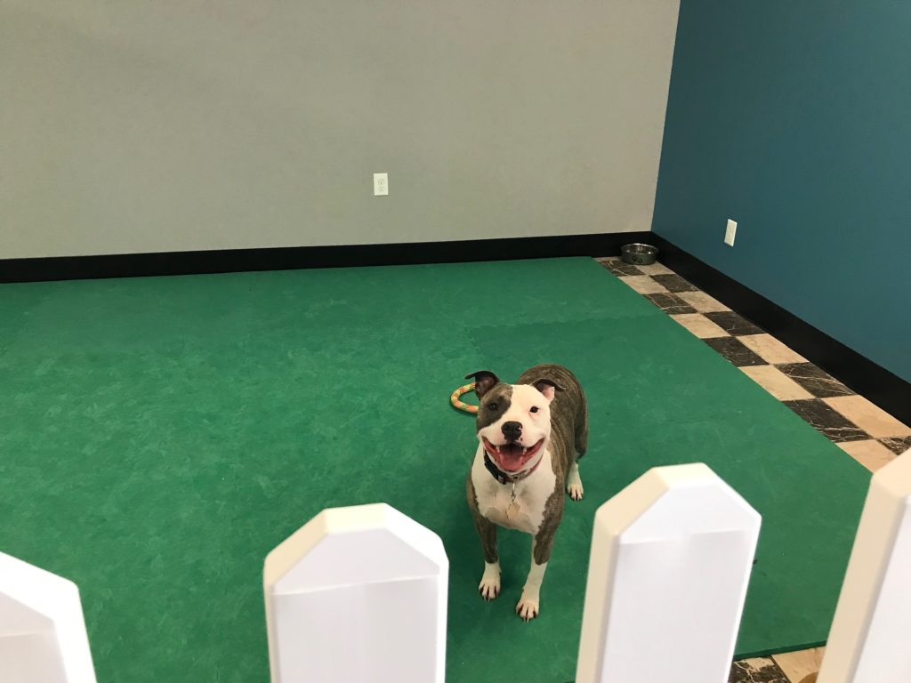 Peyton in Doggie Daycare